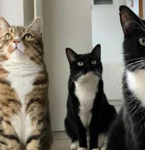 Por que os gatos ronronam?